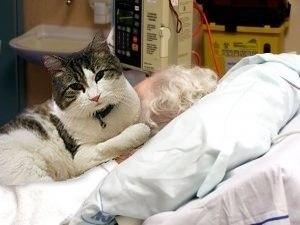 Ocкар кот, который видит смерть. В дом престарелых города Провиденс (США) Оскар попал еще котенком, ... - 2