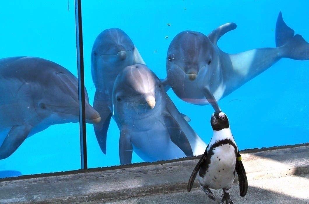 Пингвин гуляет по дельфинарию.#animal@travel.blog