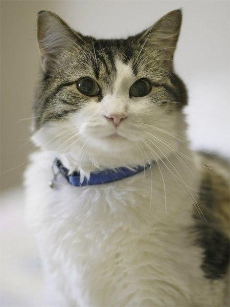 Ocкар кот, который видит смерть. В дом престарелых города Провиденс (США) Оскар попал еще котенком, ... - 6