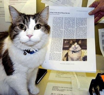 Ocкар кот, который видит смерть. В дом престарелых города Провиденс (США) Оскар попал еще котенком, ... - 3