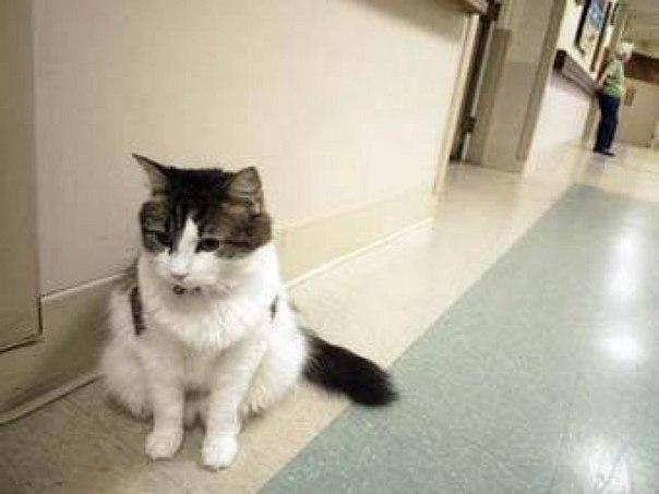 Ocкар кот, который видит смерть. В дом престарелых города Провиденс (США) Оскар попал еще котенком, ... - 5