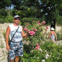 Болгария- розы в саду резиденции норвежской королевы
