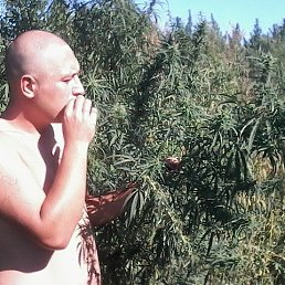 Алексей, 28 лет, Ростов