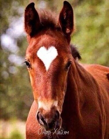 Любите и будьте любимыми.Природа рисует любовь...