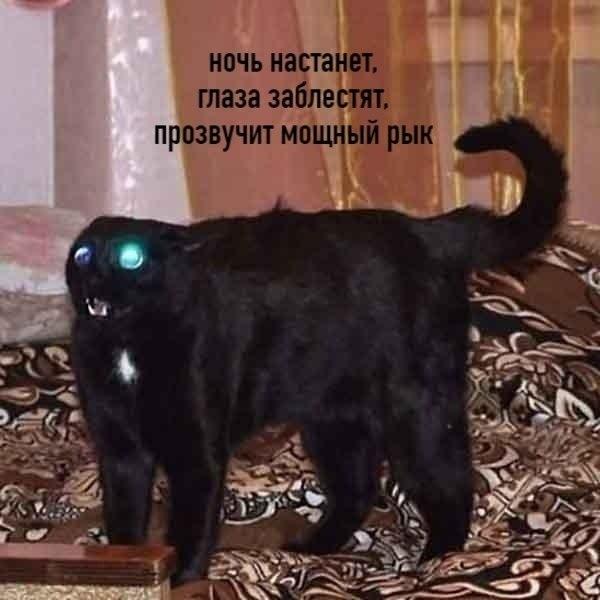 Цой по-котовски - 3