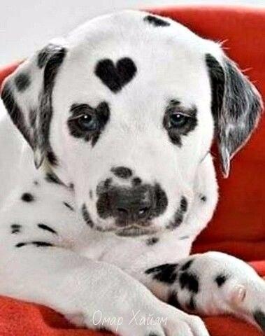 Любите и будьте любимыми.Природа рисует любовь... - 3