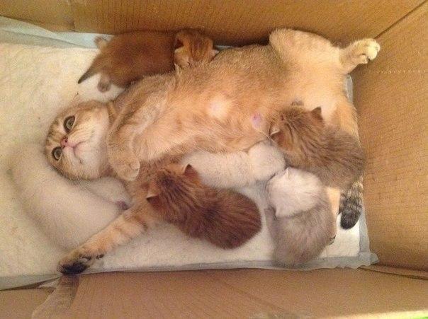 Кошки, осознавшие всю безысходность ситуации... - 4