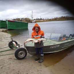 Владимир, 63 года, Тюмень