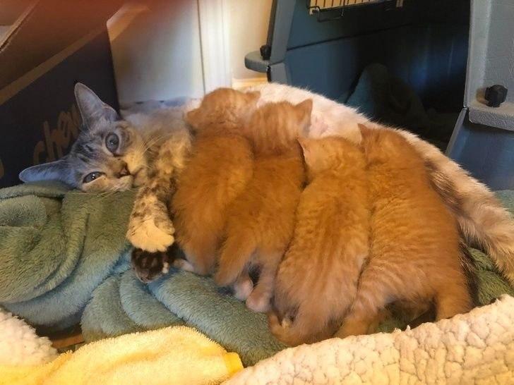 Кошки, осознавшие всю безысходность ситуации... - 3