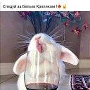 Фото Виктория, Минск, 38 лет - добавлено 12 ноября 2020 в альбом «Коллекция зайцев»
