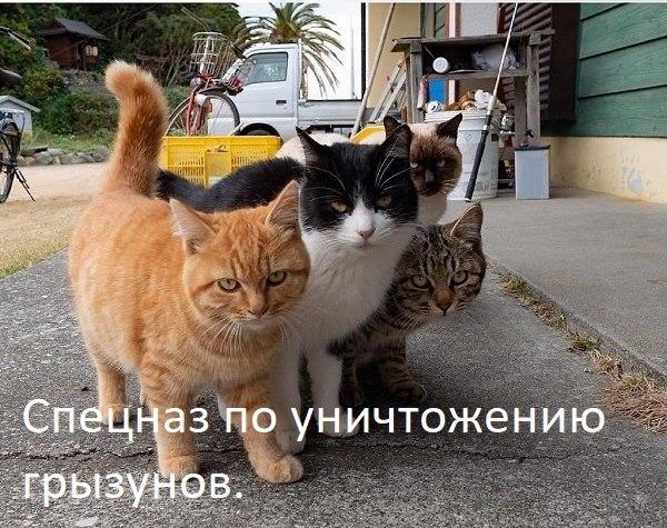 Евгений Нелюбим - 9 февраля 2021 в 18:49