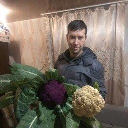 Сергей, 35 лет, Новокузнецк