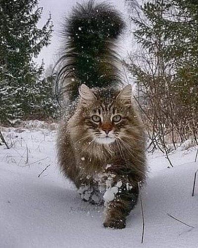 По морозу босиком к милому ходила...