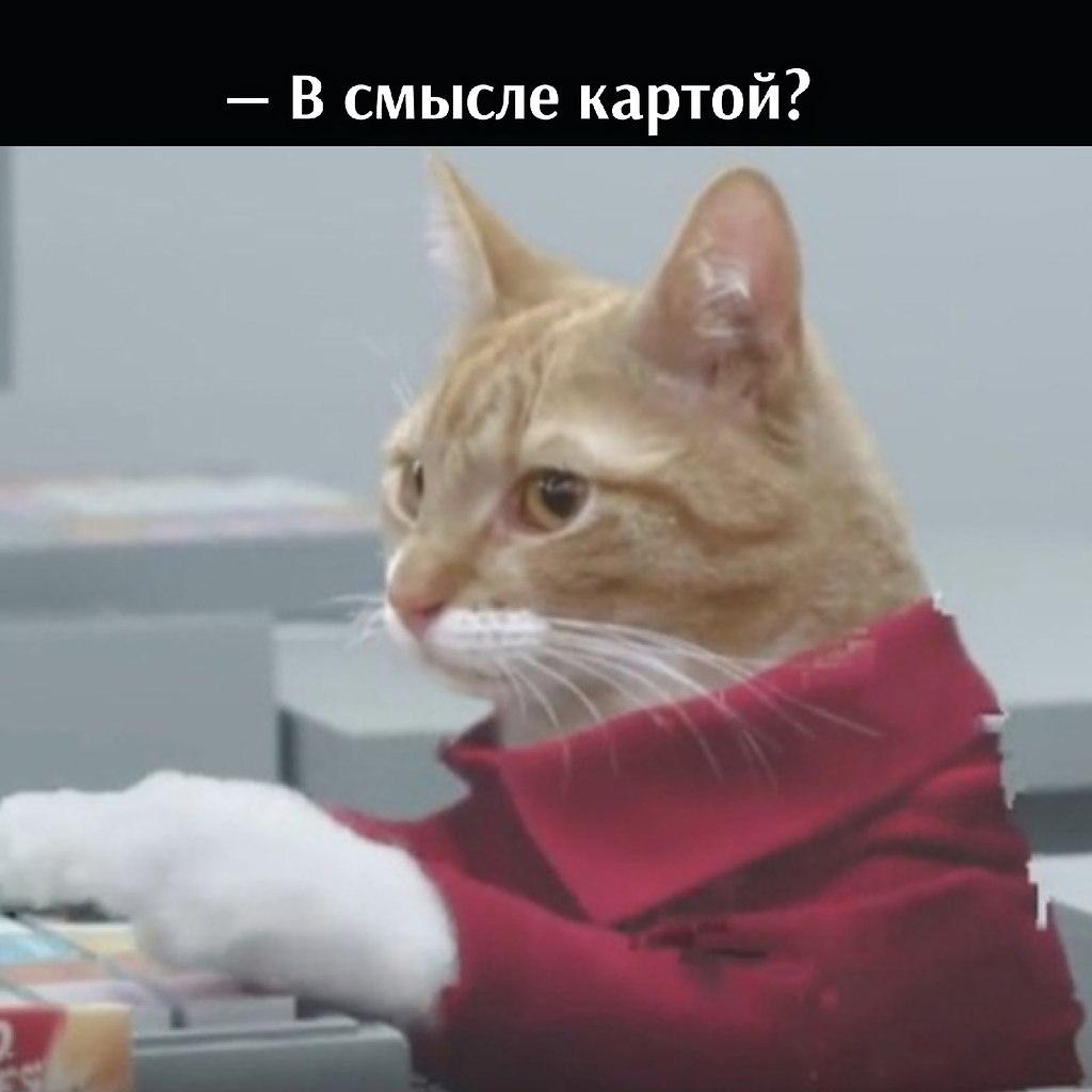 Без кота и жизнь не та - 14 июля 2021 в 19:06 - 3