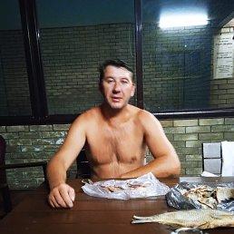 Александр, 37 лет, Ставрополь