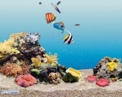 Был ли у меня когда-нибудь аквариум и кого я там держал