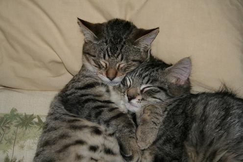 Я тебя очень люблю картинки с надписями кошками, картинки про мужчин