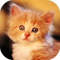 Котики - муркотики