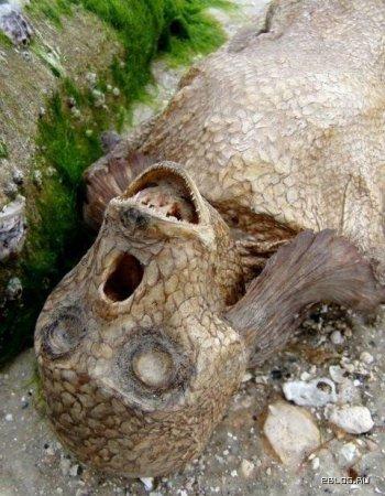 фото русалки найденной