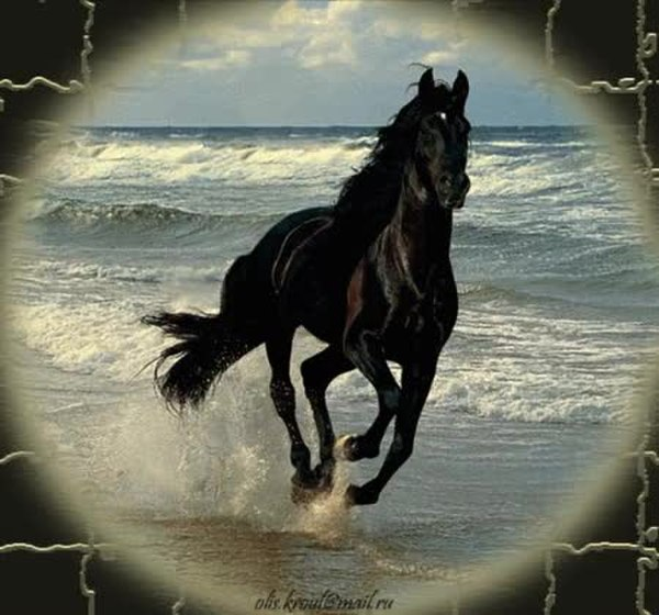 живые картинки с лошадью места